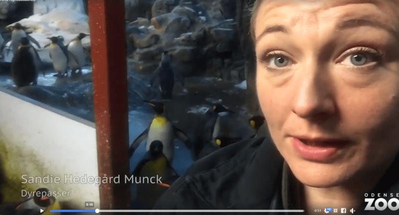 cuidadora pinguinos gays