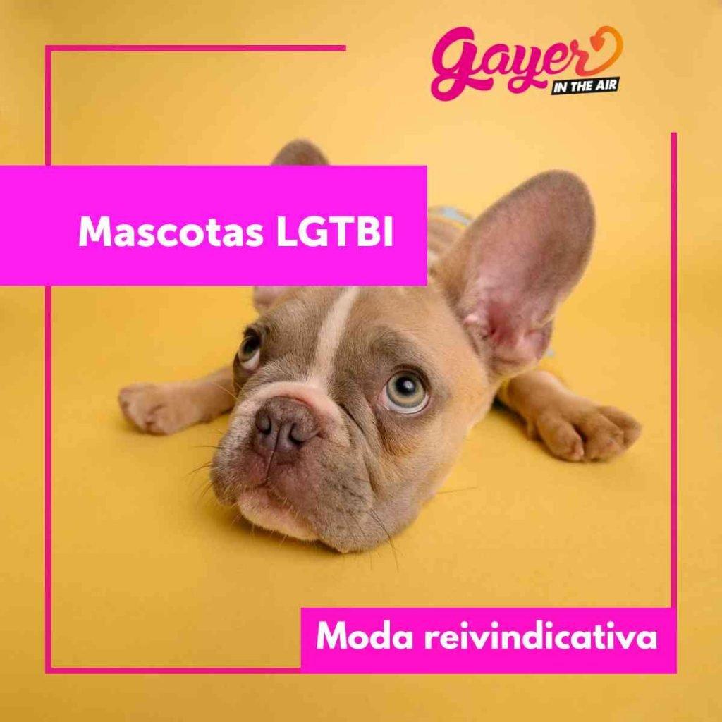 mascotas lgtbi